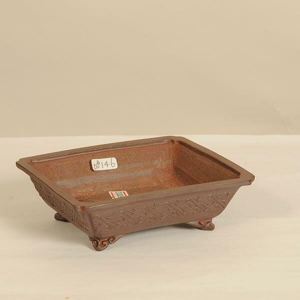 盆栽小鉢:屯洋(とんよう) 長方鉢 11.0cm【現】*Tonyou