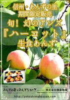 生アンズ、生あんず通販、長野県産、国産果実、旬、期間限定、人気、