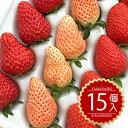 2020【紅 白イチゴ 送料無料】[山梨県産 いちご 紅白詰