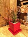【送料無料】ドラセナ レインボー 鉢植え 高さ20cm程度 観葉植物 ...