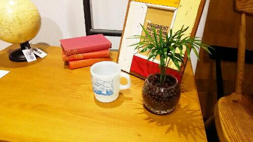 【送料無料】テーブルヤシ観葉植物ハイドロカルチャーモダンラウンドグラス【ミニ観葉モダンインテリア引越し祝い日陰新築祝い誕生日簡単丈夫育てやすい多幸ギフト】