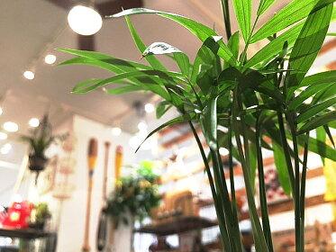 【送料無料】テーブルヤシ観葉植物ホワイトキューブ陶器鉢植え【観葉植物モダンインテリア引越し祝い日陰新築祝い誕生日簡単丈夫育てやすい風水ギフト】