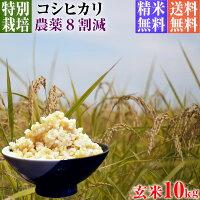 コシヒカリ,元年産,新米,減農薬栽培米,コシヒカリ,10kg,送料無料,玄米