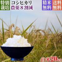コシヒカリ,30年産,新米,減農薬栽培米,コシヒカリ,10kg,送料無料,白米
