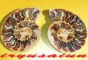 【送料無料】天然アンモナイト 菊石化石ハーフカット古生代シルル紀末期3億5000万年前 1点もの fossil開運風水置物 威龍彩雲通販