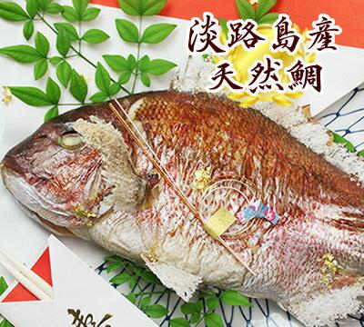 お食い初め 鯛 1kg〜 お食い初め・祝い事には淡路島の美味しい天然焼き鯛で 【楽ギフ_のし】【焼鯛・祝い鯛・祝鯛・明石鯛・天然鯛・淡路産】