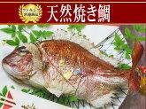お食い初め用祝い鯛