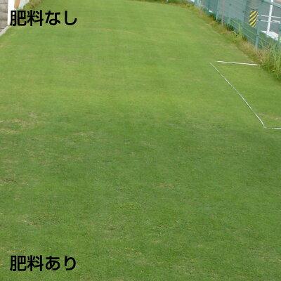 バロネス芝生の肥料効果