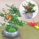 盆栽鉢 形