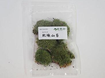 乾燥山苔 小【盆栽 苔玉 復活 テラリウム インテリア 栽培 庭 森 小さい 和風 】