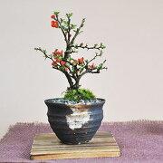 四季咲き プレゼント ラッピング
