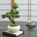 モダン盆栽 普段の生活に取り入れやすいインテリアに合わせやすい緑の松盆栽
