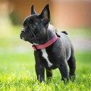 マーチンゲールカラー sleepypod Locking Martingale Collar Sサイズ 犬用 首輪 Dog  全4色【犬/首輪/】