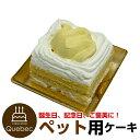 コミフ かぼちゃと豆乳のショートケーキ ペットケーキ ペット用ケーキ 誕生日ケーキ バースデーケーキ 犬用 ワンちゃん用
