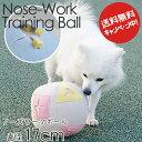 トレーニング ボール 老犬の運動不足・無