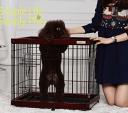 【送料無料】Simply Plusおしゃれ木製枠・金網ペット/犬ケージ...