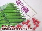 エンドウ春蒔き種子 松島三十日絹莢 30mL 小袋詰