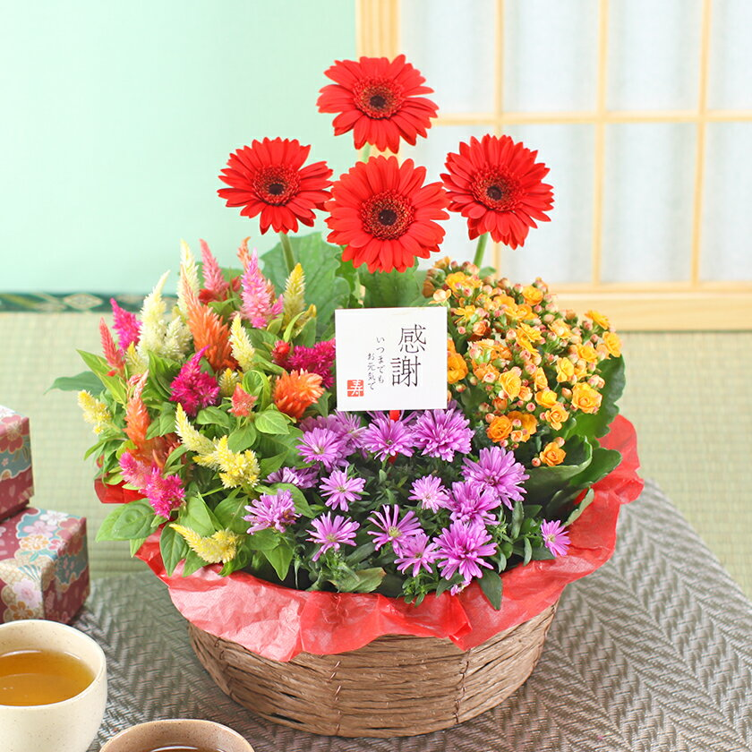 誕生日花ギフト鉢植え花寄せ鉢4種の花で作る季節の花かご敬老の日