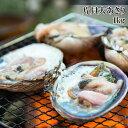 【全品5%還元】(片貝大あさり 1kg) 活ものの大あさり(ウチムラサキ貝)を使用...