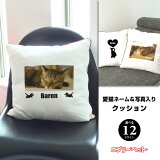 【名入れ&写真入り 愛猫 クッション】クッション 45cm クッションカバー