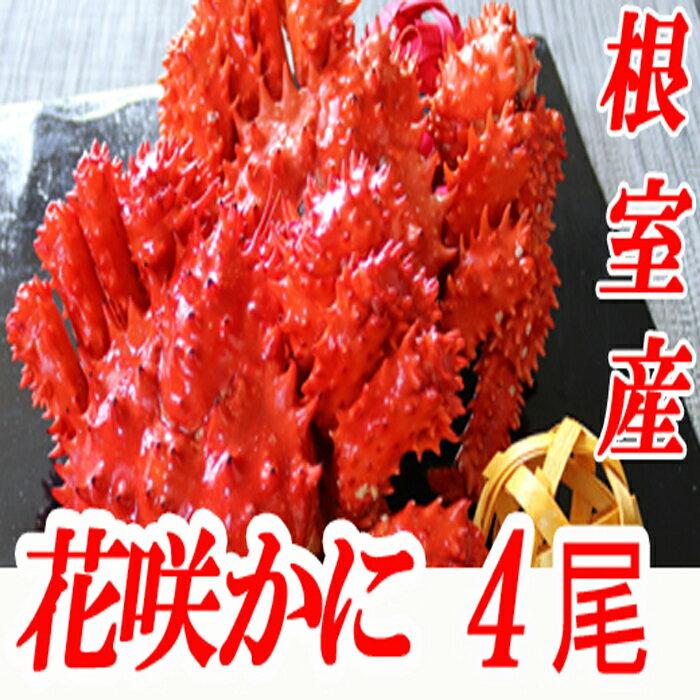 [北海道根室産]花咲かに300〜450g×4尾