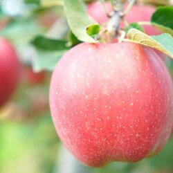【ふるさと納税】《先行予約》イーハトーヴ 訳あり 家庭用 りんご 5kg セット 岩手県花巻産 画像2