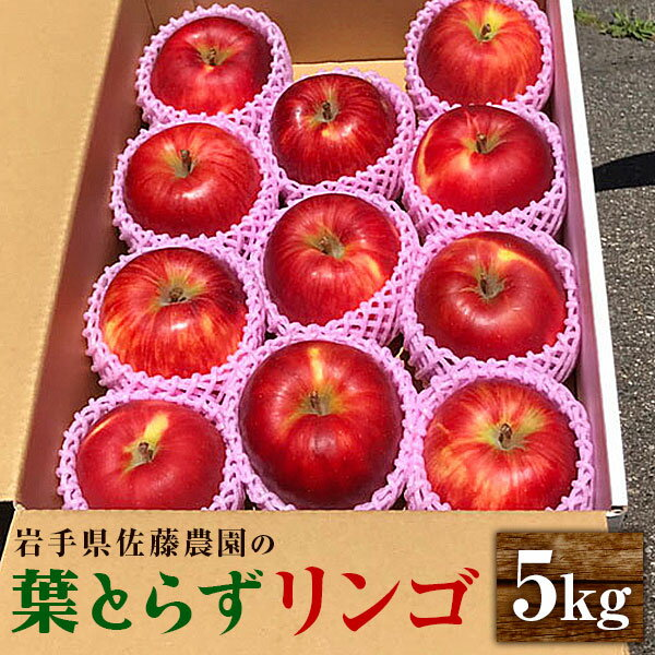 【ふるさと納税】佐藤農園の葉とらずリンゴ (サンふじ) 5kg