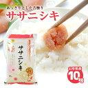 【ふるさと納税】新米 ササニシキ10kg (10kg×1袋)...