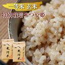 【ふるさと納税】一等米 特別栽培米つや姫玄米 5kg×2袋