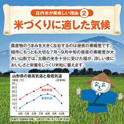【ふるさと納税】特別栽培米つや姫 5kg×3袋 計15kg 令和元年産米 山形県庄内産 ご希望の時期頃にお届け ※着日指定不可 画像2