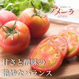【ふるさと納税】a10-371 アメーラ トマト 高糖度 トマト 産地 直送 化粧箱入