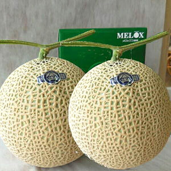 フルーツ・果物, メロン a65-033 2