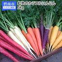 【ふるさと納税】期間限定 冬の寒さでぎゅっと濃い!虹色のカラフルにんじん H022-007
