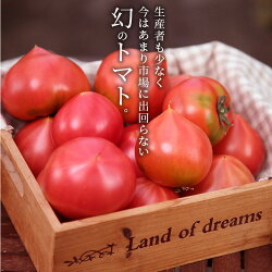 【ふるさと納税】【お試し】たった3か月しか食べられない 幻のファーストトマト H004-046 画像2
