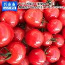 【ふるさと納税】すぐにお届け!衝撃の一粒!!奇跡のさくらんぼミニトマト(プチぷよ) 1kg H004-050