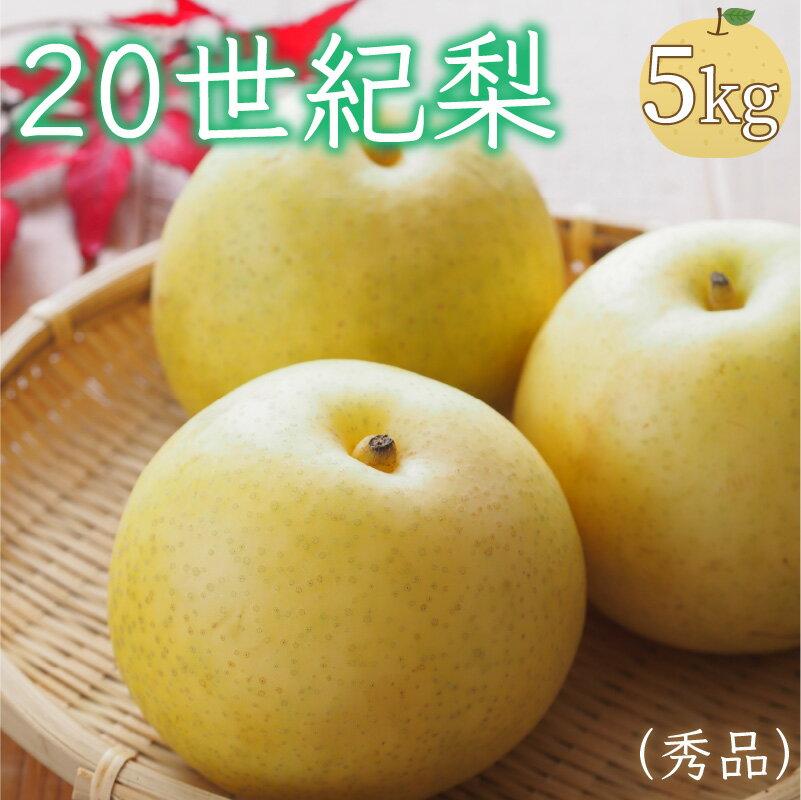 【ふるさと納税】20世紀梨(秀品)5kg 約10~16玉 2021年産 ■9月上旬~下旬発送