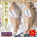 笹かれい一夜干し(ササカレイ、ヤナギムシカレイ)大サイズ 5尾セット