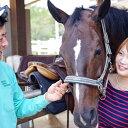 【ふるさと納税】明石乗馬協会 基礎を学べる乗馬4回コース 【体験チケット・乗馬・体験・スポーツ・アウトドア】