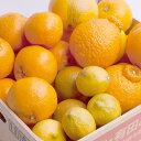 【ふるさと納税】和歌山の柑橘詰合せ7.5kg ※2019年2...