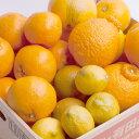 【ふるさと納税】和歌山の柑橘詰合せ6kg ※2019年2月〜...