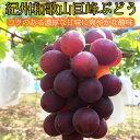 【ふるさと納税】紀州和歌山産巨峰約800g※2020年7月下...