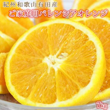 【ふるさと納税】【ご家庭用 訳あり】希少な国産バレンシアオレンジ 7kg※2021年6月中旬〜7月中旬頃発送の商品になります