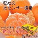 【ふるさと納税】■【和歌山県特産】絶品!有田みかん 約5kg...