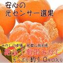 【ふるさと納税】【和歌山県特産】絶品!有田みかん 約10kg...