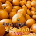 【ふるさと納税】【和歌山県特産】美味しさ満点!濃厚有田みかん...