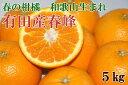 【ふるさと納税】■和歌山で生まれた春にぴったりの柑橘 有田産...