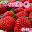 【ふるさと納税】あま〜い!まりひめ苺1kg『和歌山ブランド苺