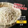 【ふるさと納税】<W11あわくら源流米コシヒカリ玄米30kg>