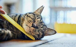 【ふるさと納税】ねこじゃすり イエロー チャリティモデル 【雑貨・日用品・ペット用品・猫・おもちゃ】