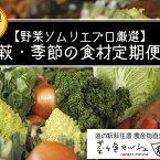 【ふるさと納税】【野菜ソムリエプロ厳選】萩・季節の食材定期便【12回コース】 【定期便・セット・詰合せ・野菜・野菜セット】